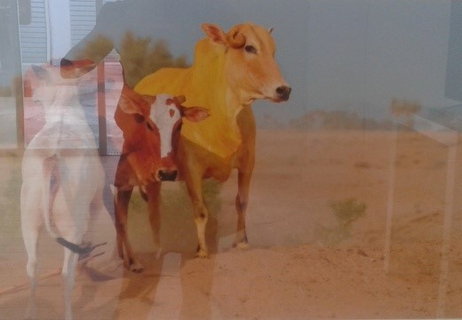 Yellow Cow 4